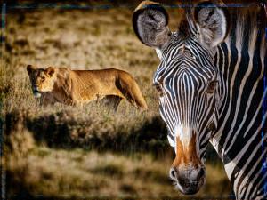 Kenia3_p25_v1-big-shst_dft_v1