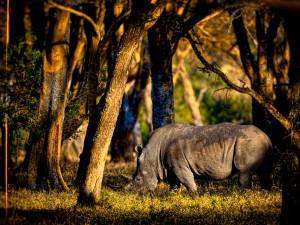 Kenia3_p30_v1-big-shst-dft_v1
